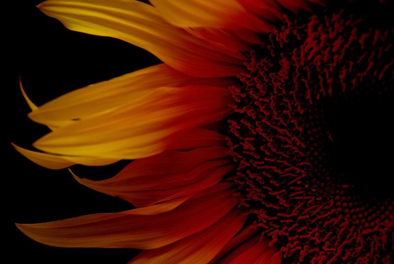slides/fireflower.jpg  fireflower