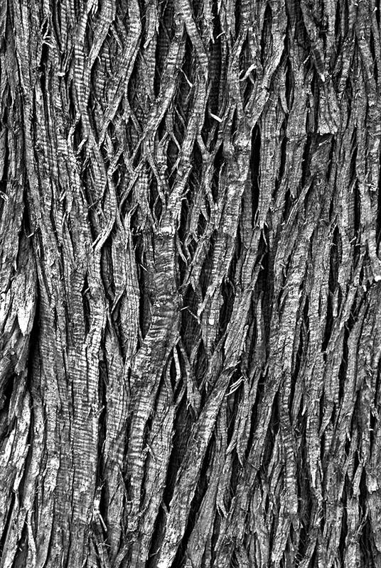 slides/bwbark01.jpg Bark Cedarburg Bog bwbark01