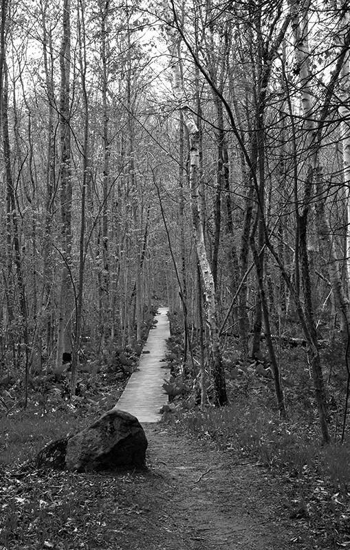 slides/bwboardwalk01.jpg Cedarburg Bog bwboardwalk01