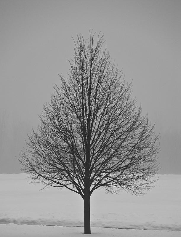 slides/fog_tree.jpg Nikon fog mist tree fog_tree