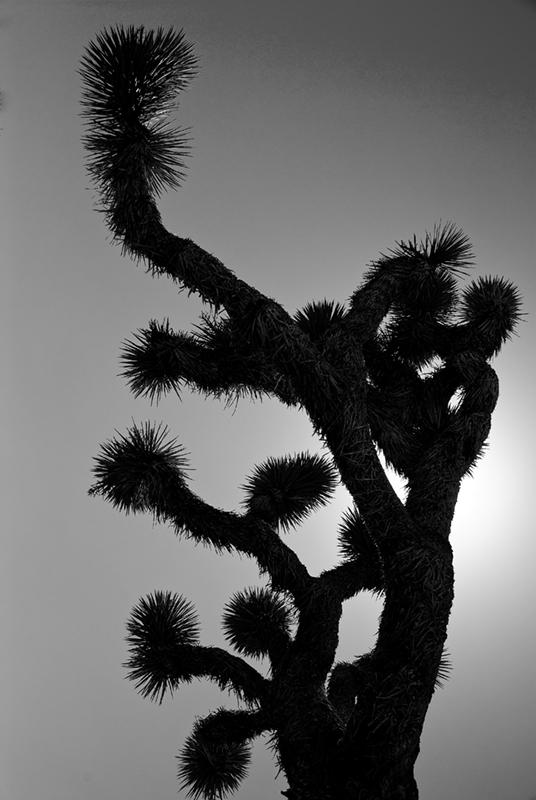slides/joshua-tree-park19.jpg  joshua-tree-park19