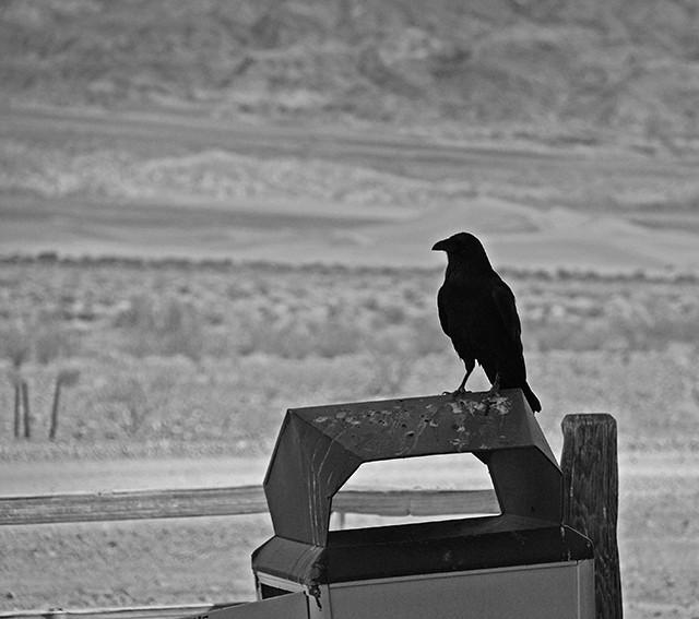 slides/raven.jpg Website raven