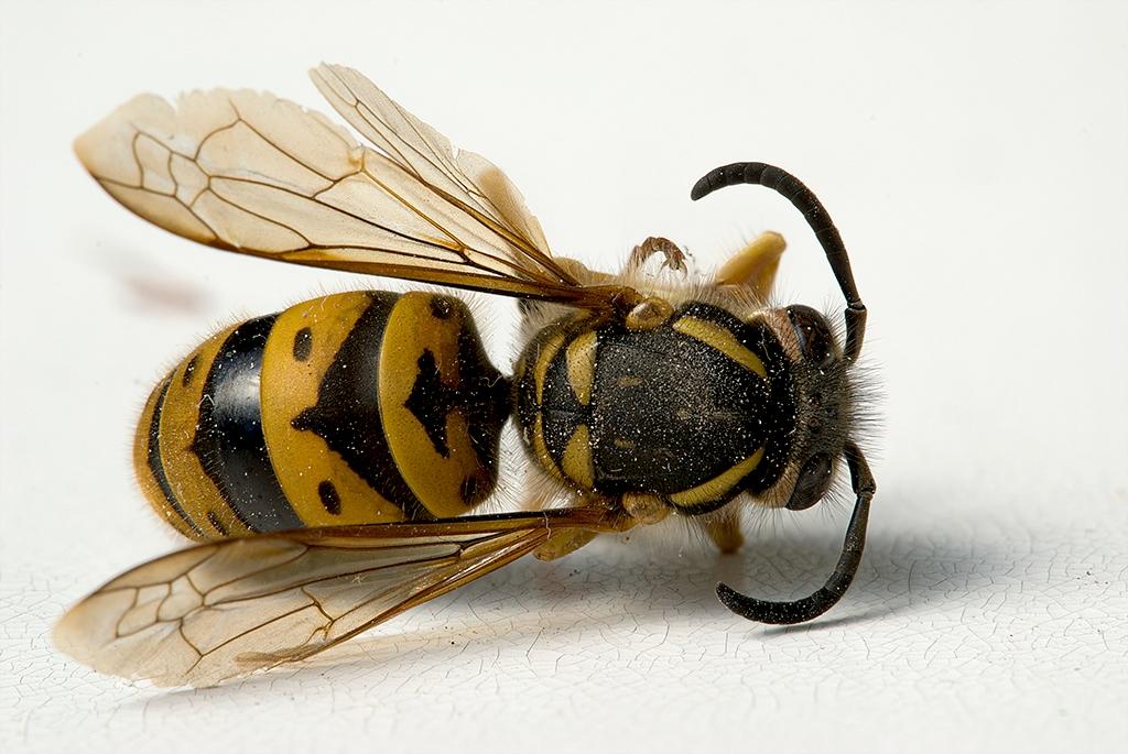 slides/hornet.jpg  hornet