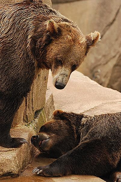 slides/bears.jpg  bears