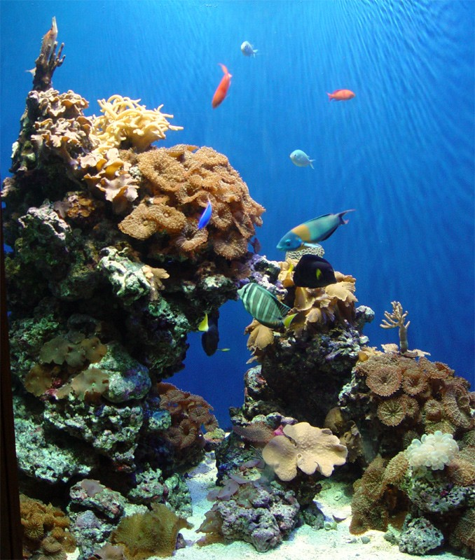 slides/fish1.jpg  fish1