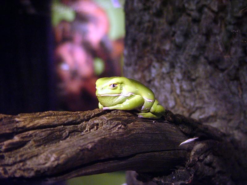 slides/frog1.jpg  frog1