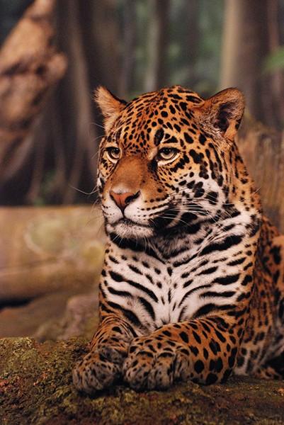 slides/leopard01.jpg  leopard01
