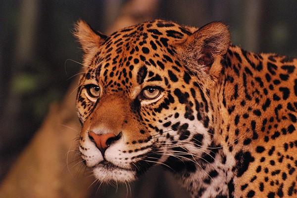 slides/leopard02.jpg  leopard02