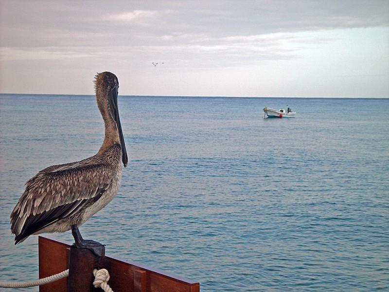 slides/pelican03.jpg  pelican03