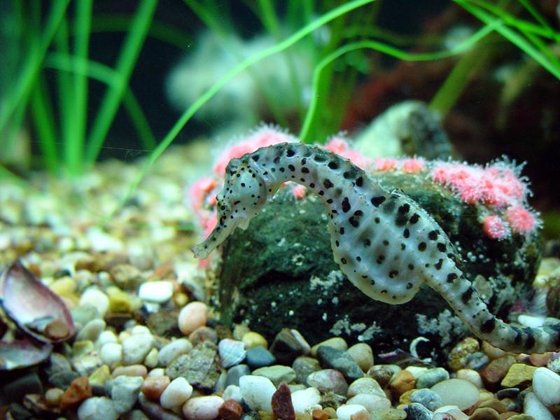 slides/seahorse2.jpg  seahorse2
