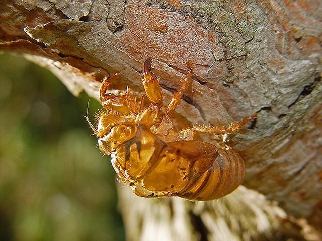 slides/cicada2.jpg  cicada2