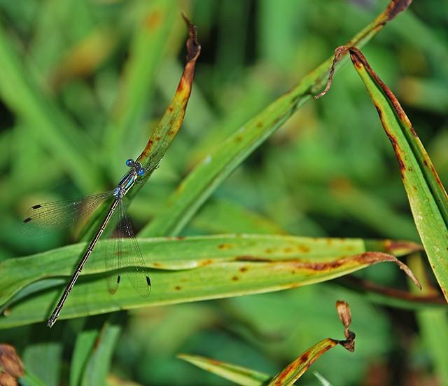 slides/dragonfly01.jpg Website dragonfly01