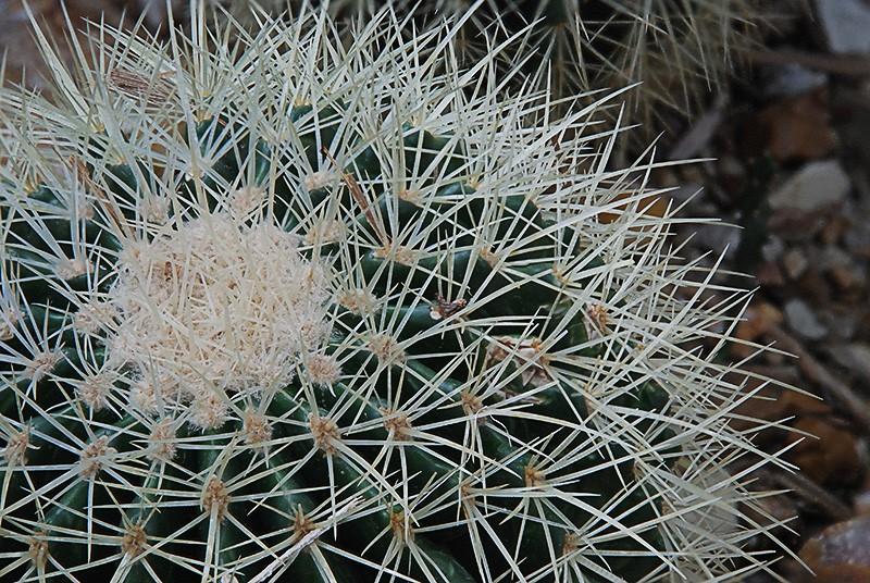 slides/domes-cactus.jpg  domes-cactus