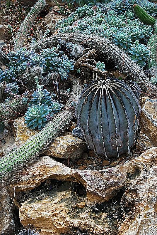 slides/domes-cactusDSC_1526-2.jpg  domes-cactusDSC_1526-2