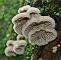 slides/mushroom03bie.jpg Website mushroom03bie