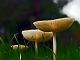 slides/mushrooms01ie.jpg Website mushrooms01ie