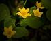 slides/spotywflowers02.jpg Cedarburg Bog Flowers spotywflowers02