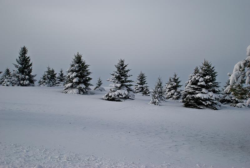 slides/Snowy_Evergreens.jpg Nikon snow winter Snowy_Evergreens