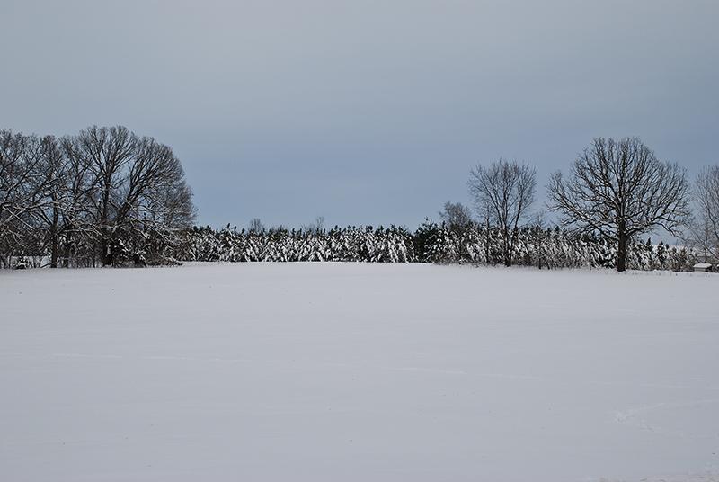 slides/Snowy_Evergreens2.jpg  Snowy_Evergreens2
