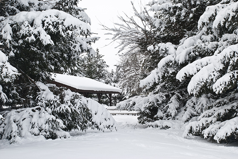 slides/Snowy_Evergreens_and_shelter.jpg  Snowy_Evergreens_and_shelter