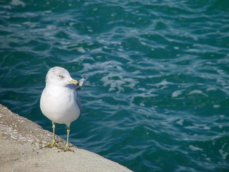 slides/seagull.jpg  seagull