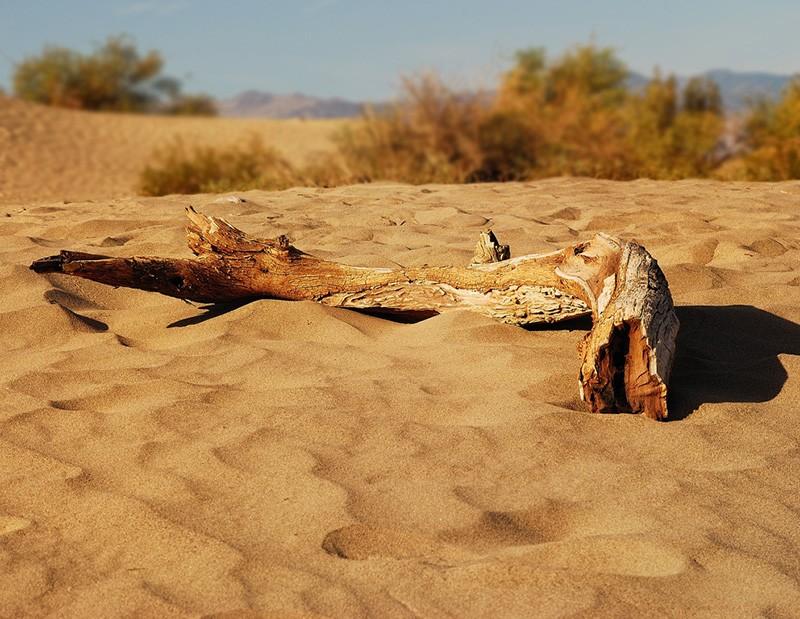 slides/driftwood01.jpg  driftwood01