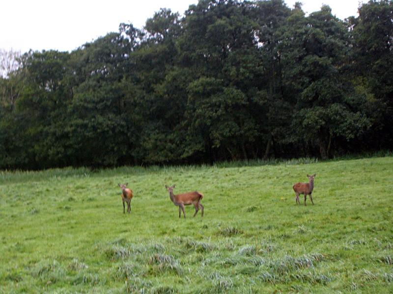 slides/deers.jpg  deers