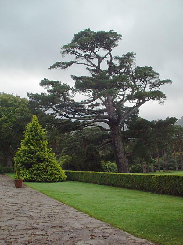 slides/muckross-house-grounds3.jpg  muckross-house-grounds3