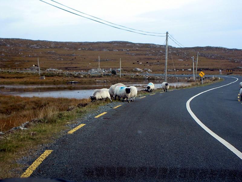 slides/road-sheeps.jpg  road-sheeps