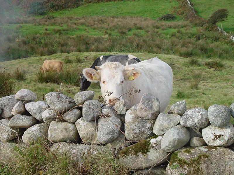 slides/roadside-cows.jpg  roadside-cows