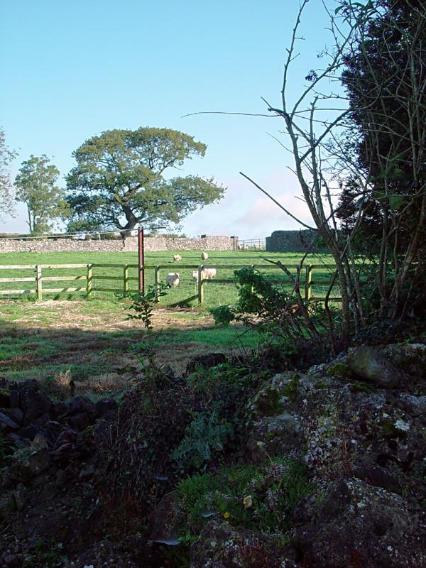 slides/sheep-farm-in-Cashel3.jpg  sheep-farm-in-Cashel3