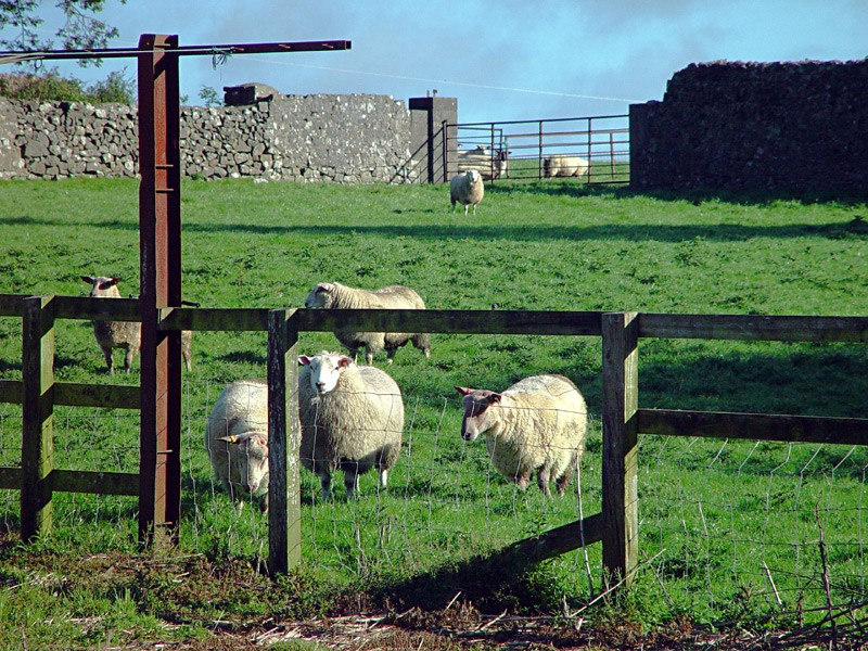 slides/sheep-farm-in-Cashel4.jpg  sheep-farm-in-Cashel4