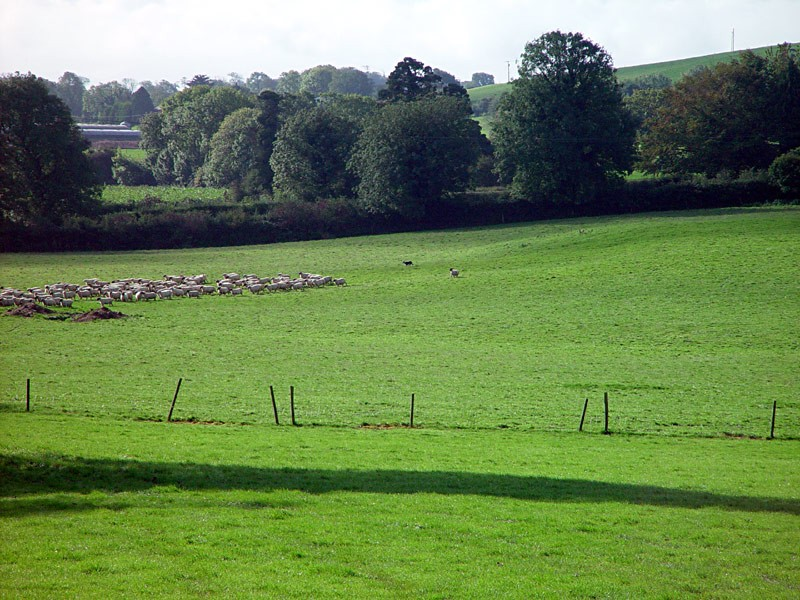 slides/sheep-herding3.jpg  sheep-herding3
