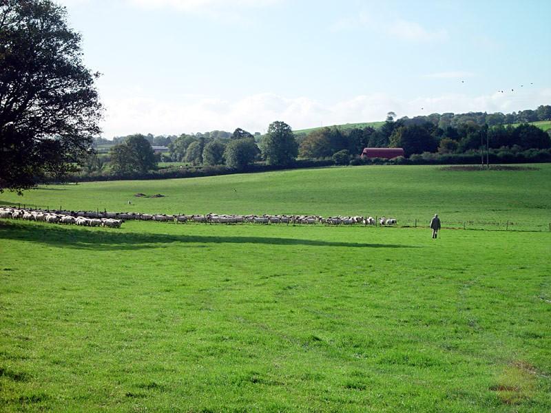 slides/sheep-herding4.jpg  sheep-herding4