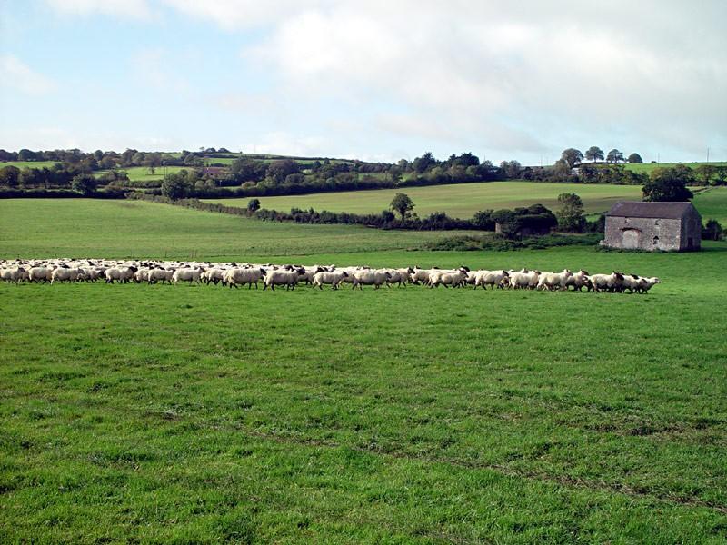 slides/sheep-herding5.jpg  sheep-herding5