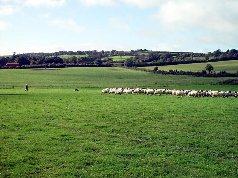slides/sheep-herding6.jpg  sheep-herding6