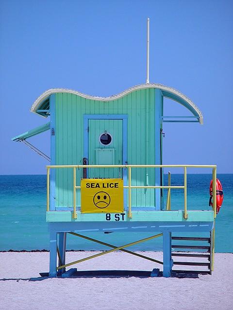 slides/sealice.jpg  sealice