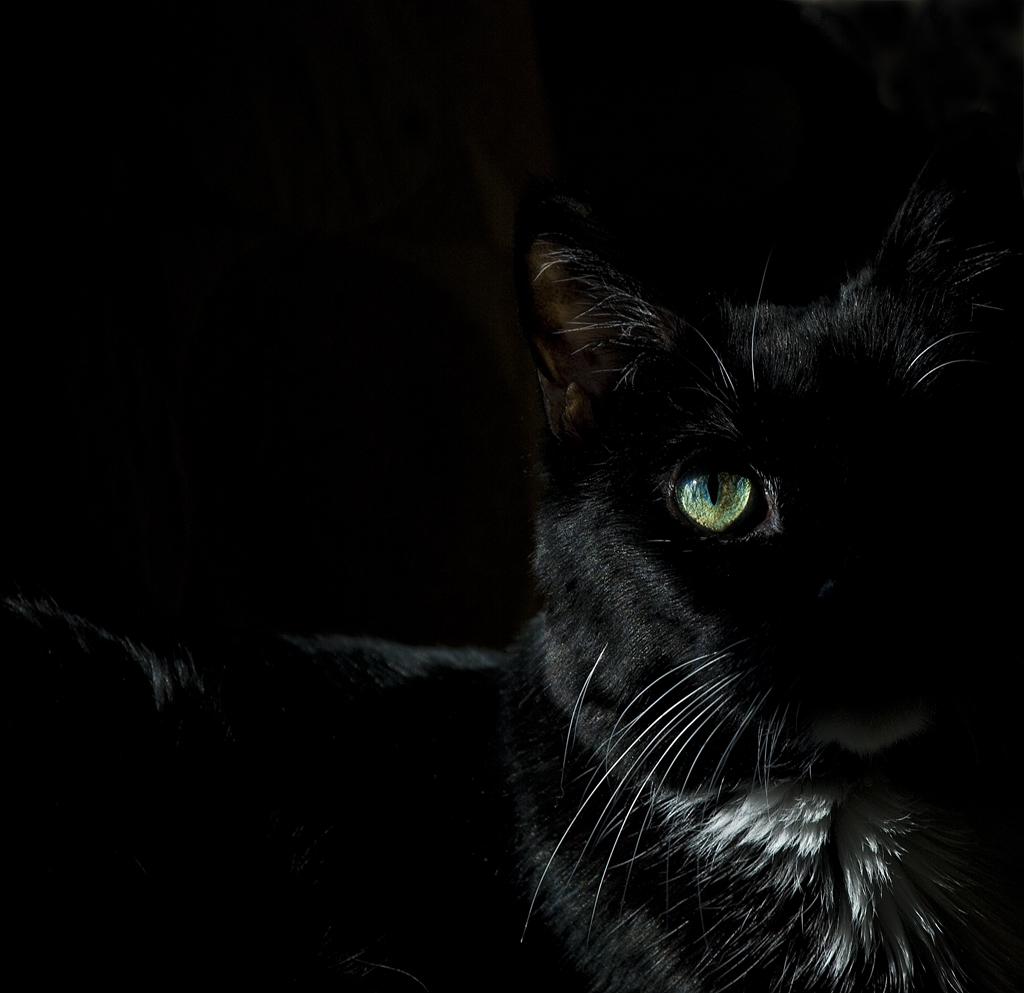 slides/cats_eye.jpg  cats_eye