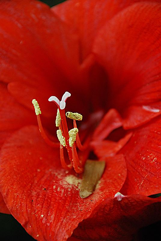 slides/domes-flower-red-DSC_1506.jpg  domes-flower-red-DSC_1506